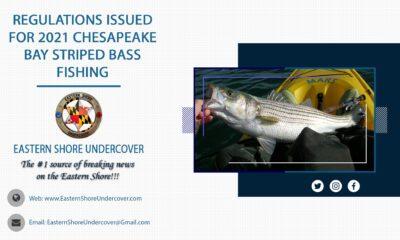 Chesapeake Bay Striped Bass Regulations