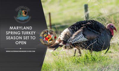 MD DNR Turkey Season